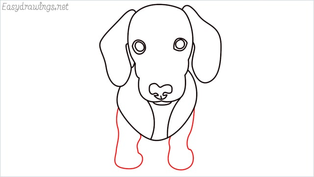 How to draw a puppy step (9)