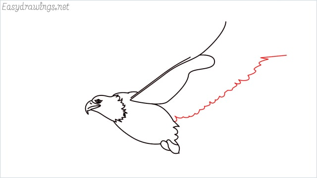 How to draw an eagle flying step (10)