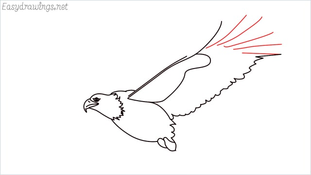 How to draw an eagle flying step (11)