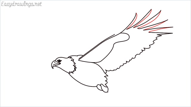How to draw an eagle flying step (12)