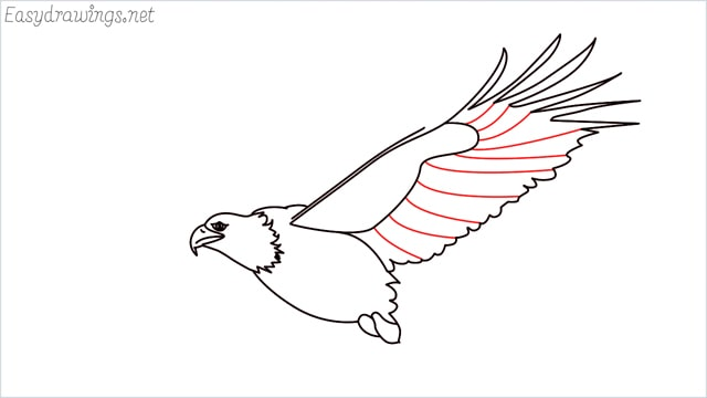 How to draw an eagle flying step (13)