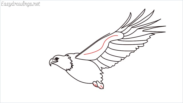 How to draw an eagle flying step (14)