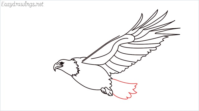 How to draw an eagle flying step (15)