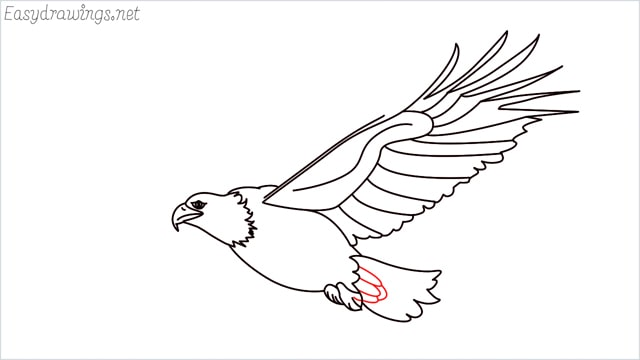 How to draw an eagle flying step (16)