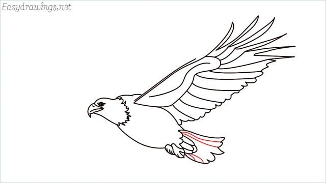 How to draw an eagle flying step (17)