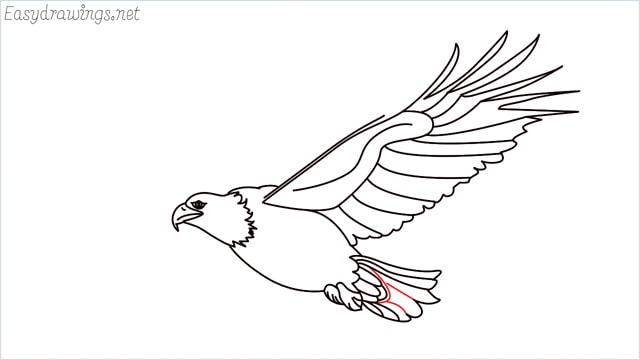 How to draw an eagle flying step (18)