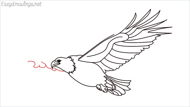 How to draw an eagle flying step (19)