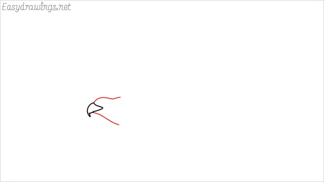 How to draw an eagle flying step (2)