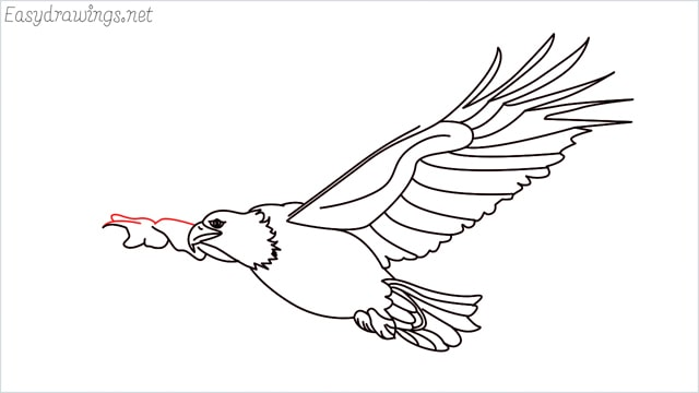 How to draw an eagle flying step (20)