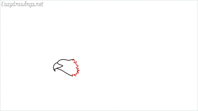 How to draw an eagle flying step (3)