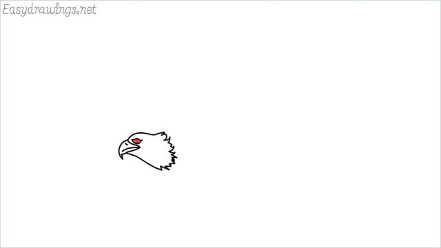 How to draw an eagle flying step (5)