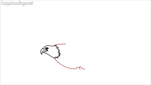 How to draw an eagle flying step (6)