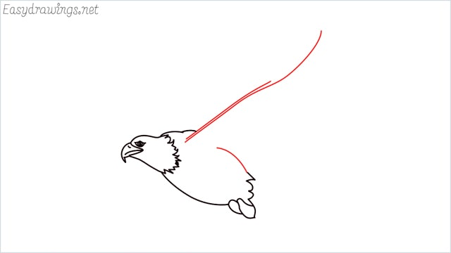 How to draw an eagle flying step (8)