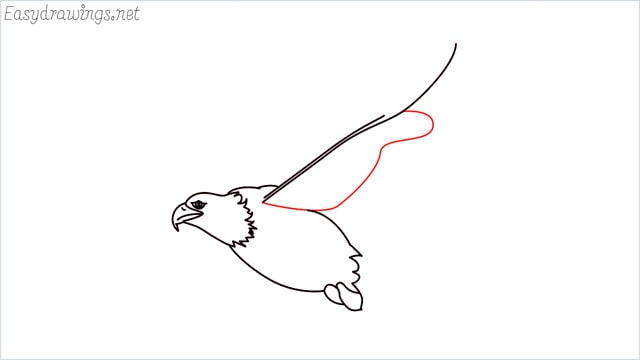 How to draw an eagle flying step (9)