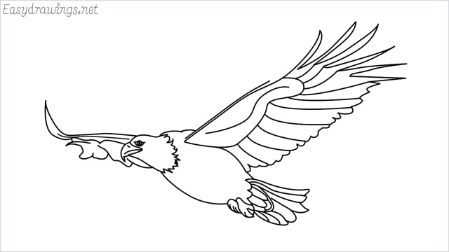How to draw an eagle flying step by step