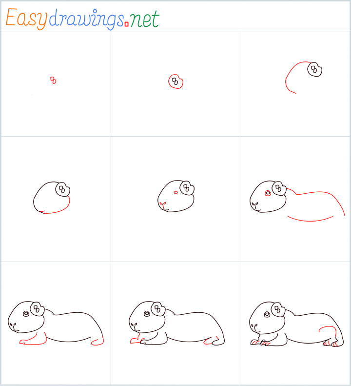 Overview Guinea Pig Drawing