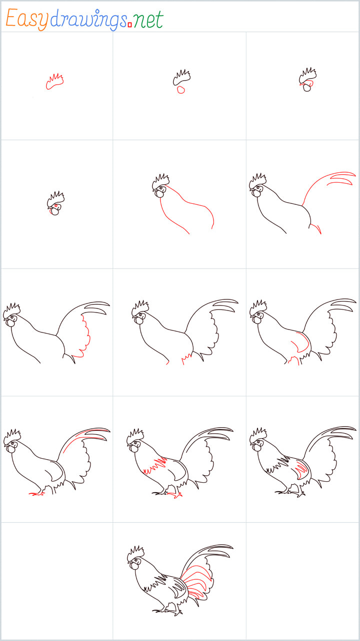 Overview Rooster Drawing