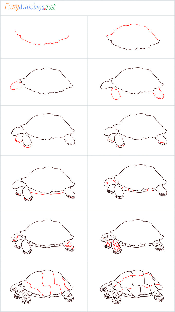 Overview Sea Turtle drawing steps