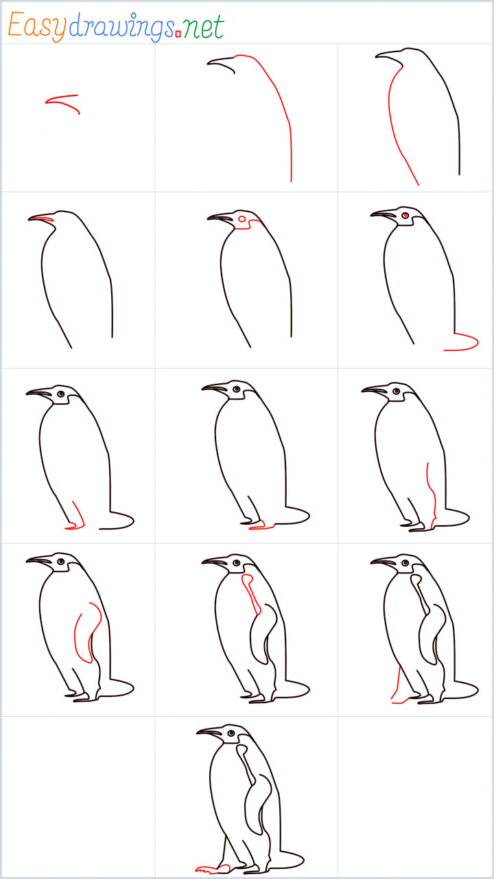 Overview for Penguin drawing all steps