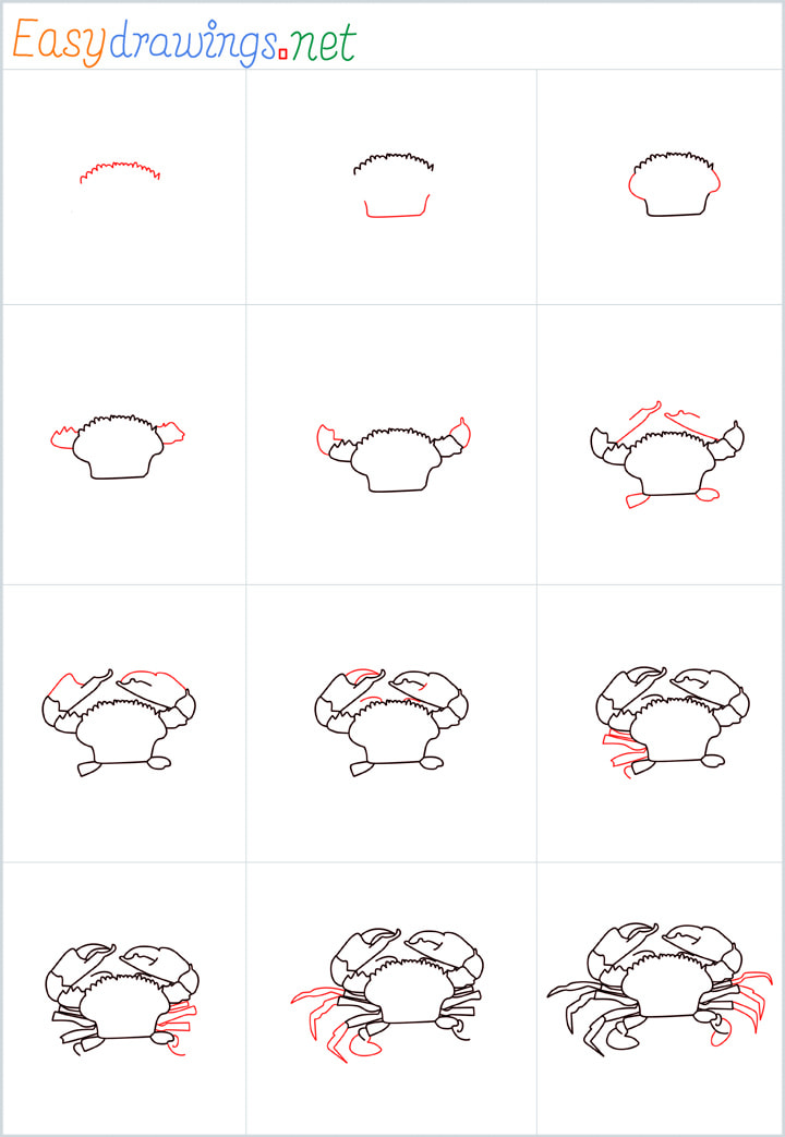 Overview realistic crab drawing steps