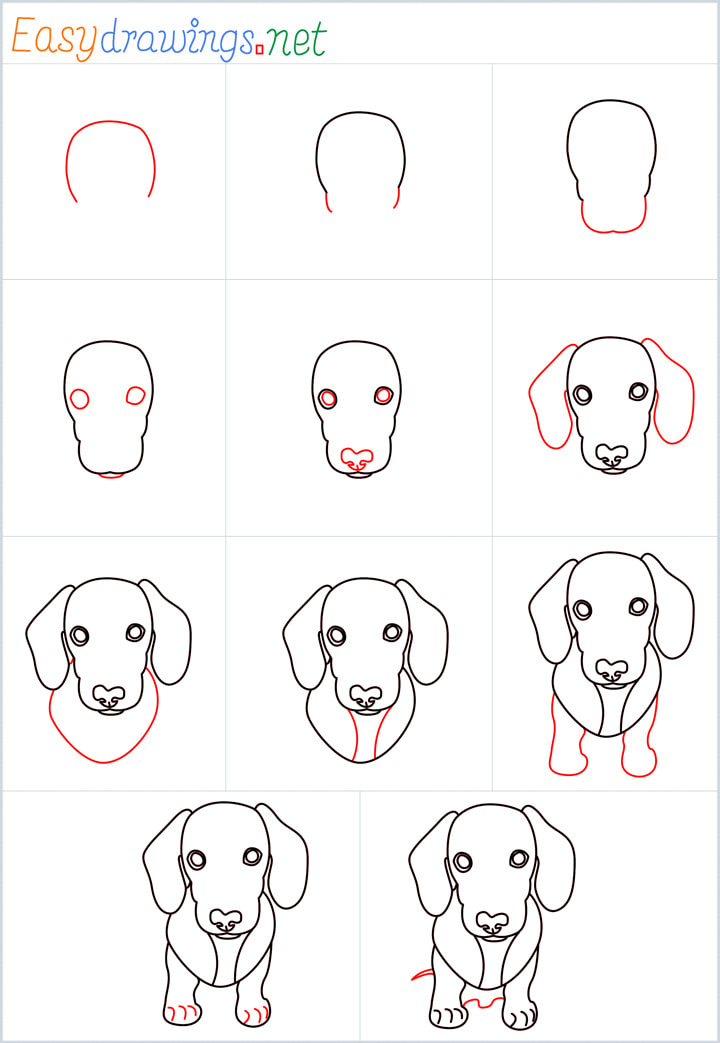 all outline for Puppy drawing example