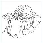 draw a betta fish
