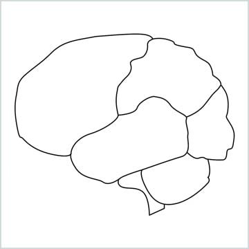 draw a brain