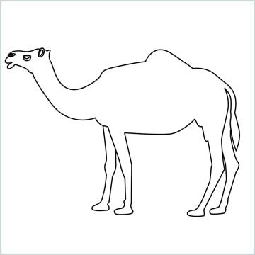 draw a camel