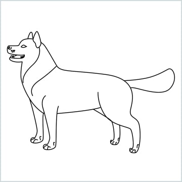 draw a husky