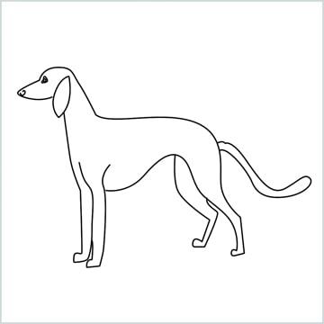 draw a suluki dog