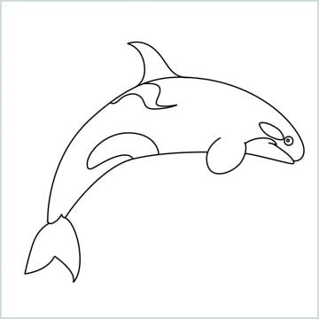 draw a Orca