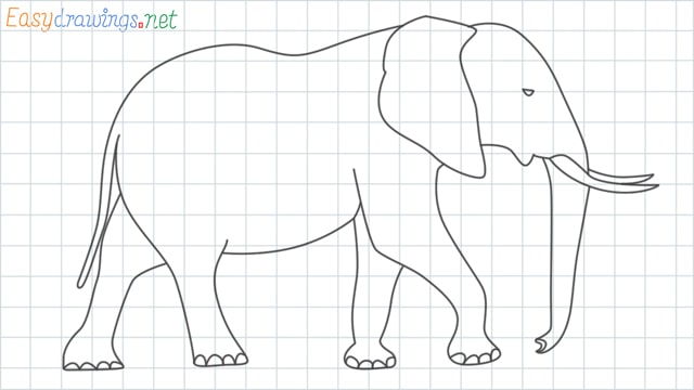 grid line Elephant drawing