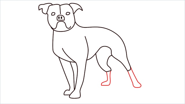 how to draw a Bulldog step (12)