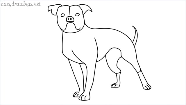 How To Draw A Bulldog Step By Step Easydrawings Net