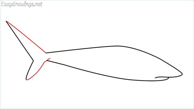 how to draw a baby great white shark step (4)