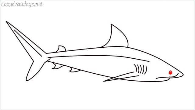 how to draw a baby great white shark step (9)