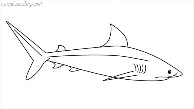 how to draw a baby great white shark step by step