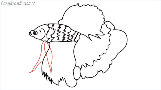 how to draw a betta fish step (12)