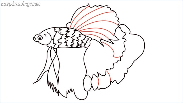 how to draw a betta fish step (13)