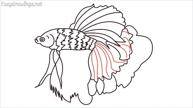how to draw a betta fish step (14)