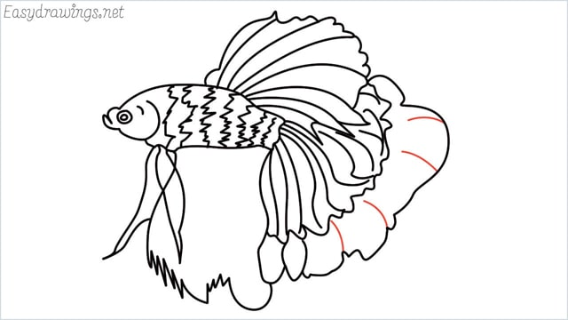 how to draw a betta fish step (15)