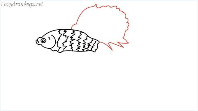 how to draw a betta fish step (7)
