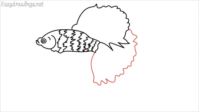 how to draw a betta fish step (8)