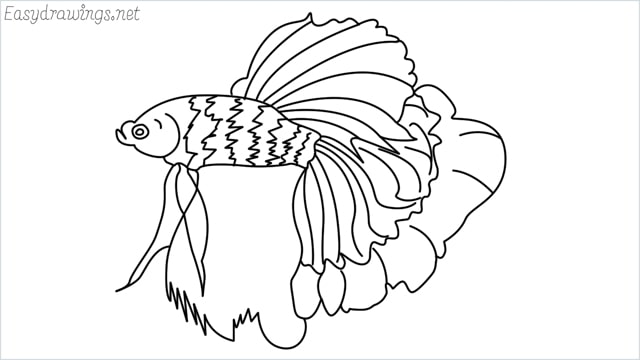 how to draw a betta fish
