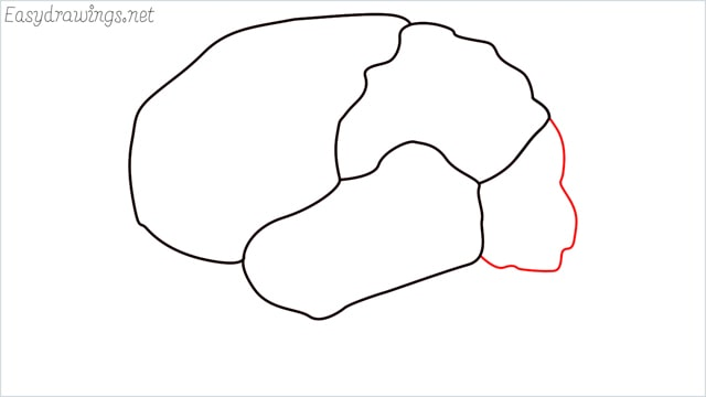how to draw a brain step (5)