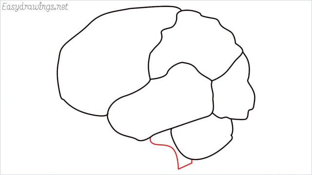 how to draw a brain step (7)