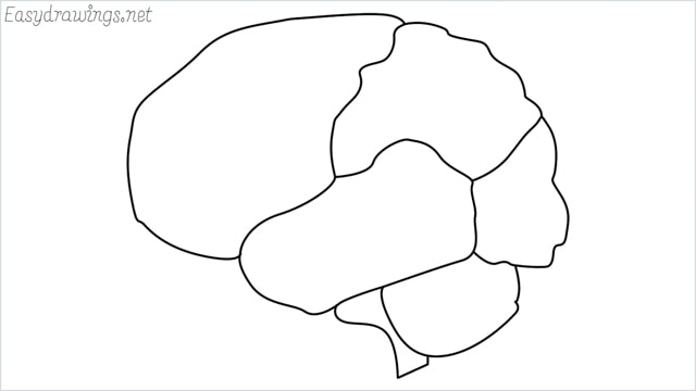 how to draw a brain step by step
