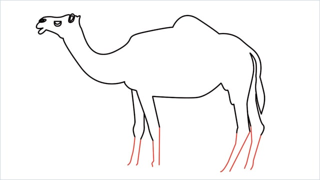 how to draw a camel step (12)