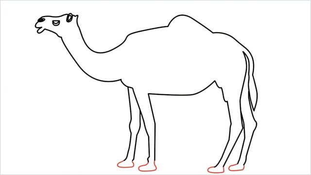 how to draw a camel step (13)