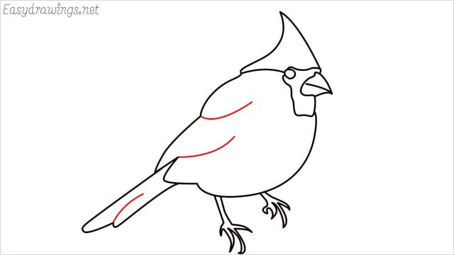 how to draw a cardinal bird step (10)